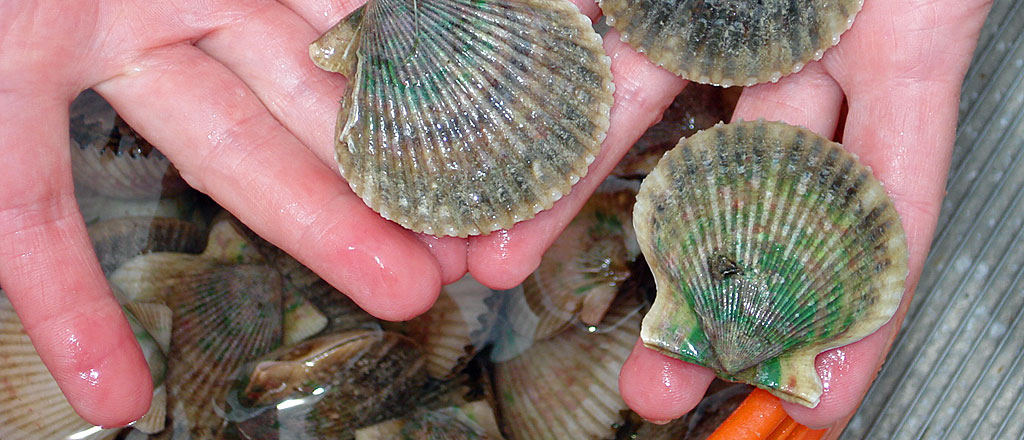 Grant takes Cleaver to Ireland for conference on scallops