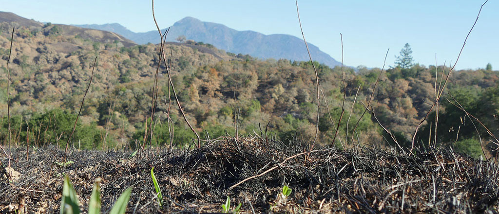 Pepperwood rebounds from massive wildfire