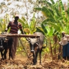 Adaptation to climate change - Photo: P. Casier (CGIAR)