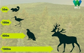 Reed co-authors report on keeping social distance from wildlife
