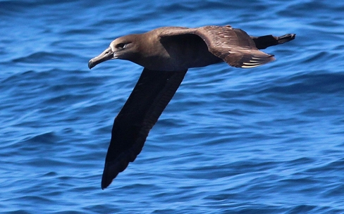 Working Group Re-Assessing Pacific Albatross Population Status