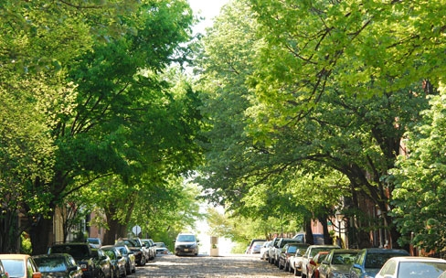 Greening cities makes for safer neighborhoods