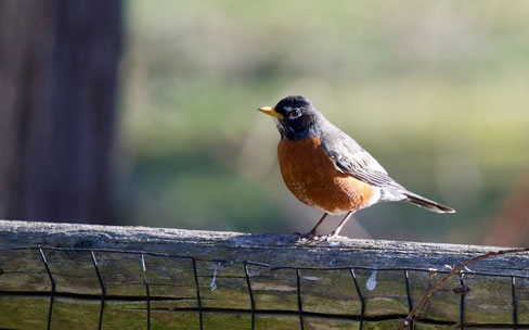 Leppold quoted on monitoring disease killing birds in mid-Atlantic states
