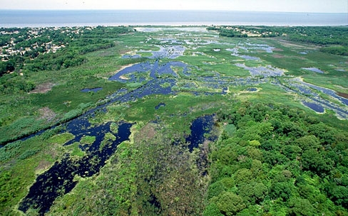 Wetlands in Cape May, New Jersey