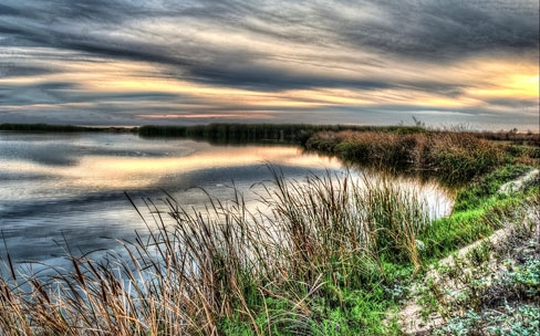Working to Reveal Promise: Innovation Grant helps connect new dots between wetland protection and management